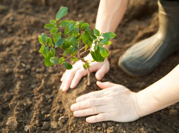 How Can We Actively Restore the Environment? By Planting Trees