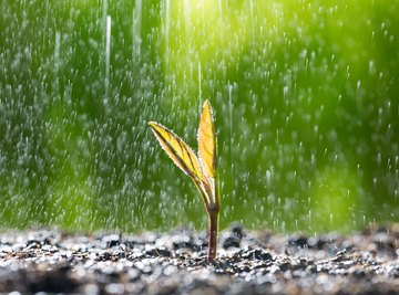 The Effects of Rain Water on Plants