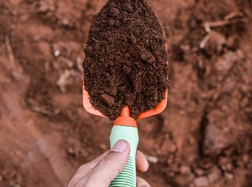 List Some Types of Bacteria Found in Soil