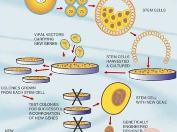 About Gene Transfer