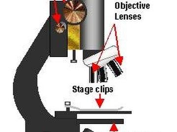 Use A Scientific Microscope