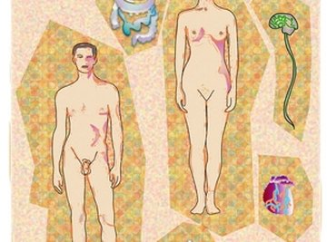 The human body is made up of more than 100 trillion cells.