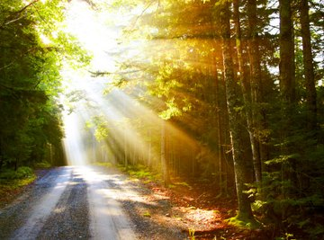 Sunlight provides plants with the energy they need in the form of carbohydrates.