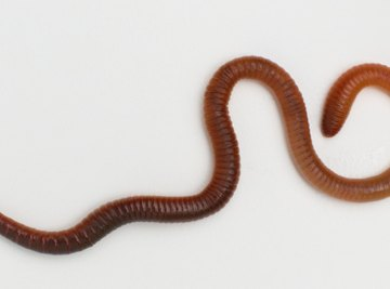 Earthworms detect light through cells in their skin.