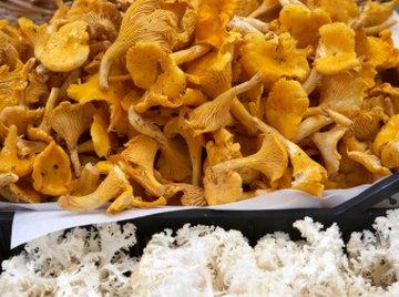 Bright orange chanterelle mushrooms can be found in Virginia.