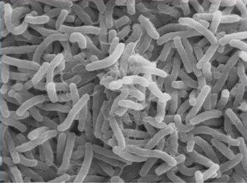 How Do Bacteria Respire?