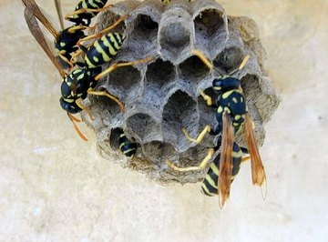 Some nasty wasps planning to sting someone