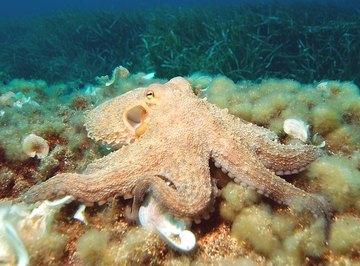 Mollusk Life Cycle