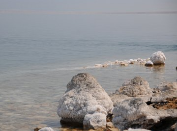 Can Anything Live in the Dead Sea?