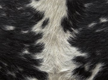 The quality of animal hides used for leather is often improved through treatment with pepsin.
