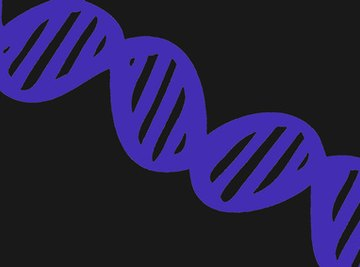 Building a model of the DNA double helix can help you learn how it works.
