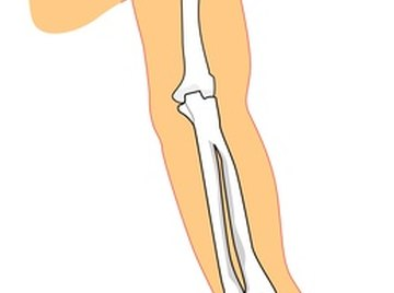 A shoulder is a ball and socket joint.