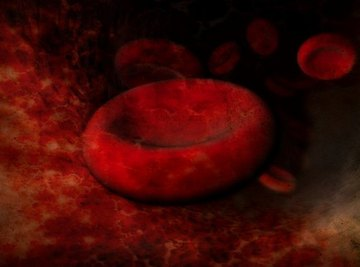 As effectors of the circulatory system, blood cells are intimately associated with the spleen and bone marrow.