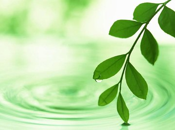 Photosynthesis is the creation of food in green plants.
