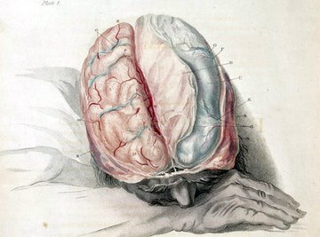 The brain has different places for short and long-term memory.