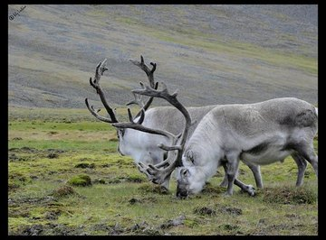 Differences Between the Grassland & the Tundra