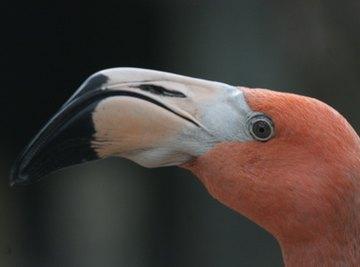 Natural Habitat for Flamingos