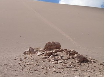 Animals of the Coastal Desert Biome
