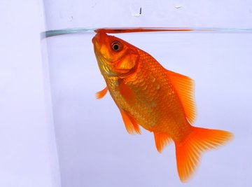 Fish Behavior Science Fair Ideas