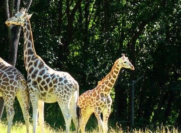 Animal Reproduction & Development