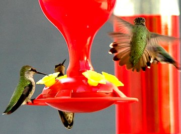 What Is the Sugar Water Formula for Humming Bird Feeders?