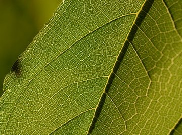 Each section of a plant is made from millions of plant cells.