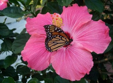 How Do Insects Pollinate Flowers?