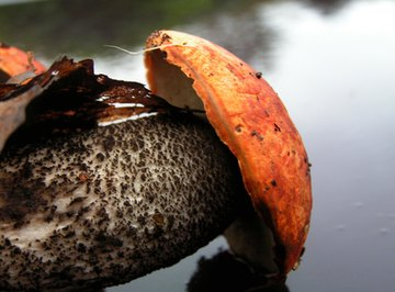 Mushroom Hunting in North Idaho