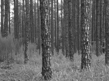Timber is just one of South Carolina's natural resources.
