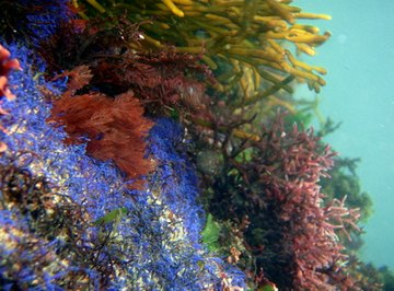 All marine plants require sunlight to live.