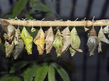 Types of Cocoons