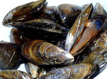 Types of Mussels