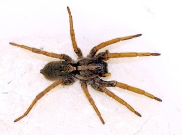Spiders often feed on damaging pests.