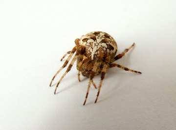 Common House Spiders in Connecticut