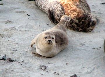 Physical Characteristics of Seals