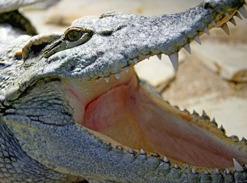 The Types of Reptiles in Vietnam