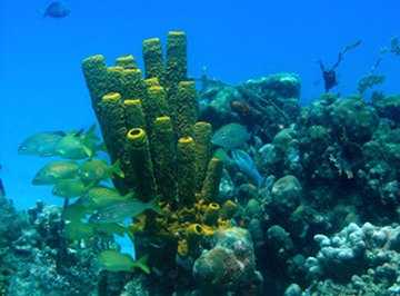 Plants in a Coral Reef