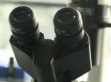 Microscopes enable us to see a world beyond our normal range of sight.