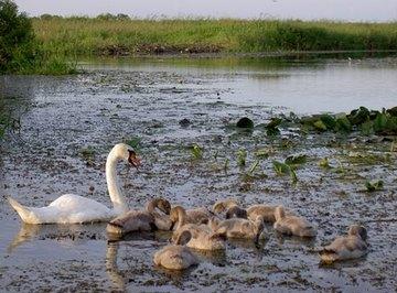 How Do Wetlands Filter Water?