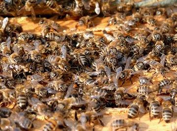 Making Bee Pollen Patties for Bees