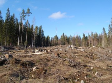 Logging contributes to soil degradation in the form of erosion.