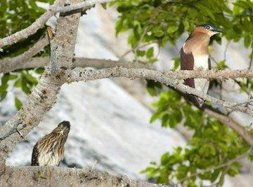 Taiheiyo Evergreen Forest Animals