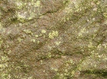 Blue-green algae, also called