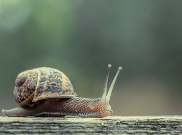 A snail on a wood ledge.