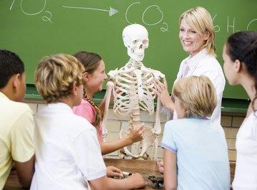 Teacher showing human skeleton to students