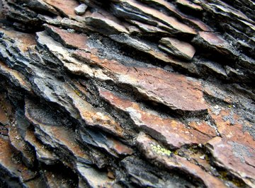 Shale shows how muddy sediments are deposited in layers.