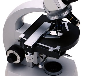 Binocular compound microscopes have two ocular lenses.
