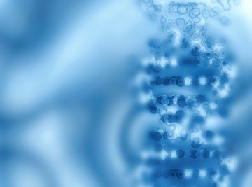 Nucleic acids are large particles called
