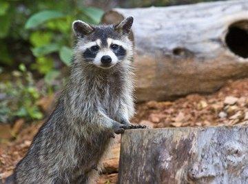 Visit a nature center to study woodland habitats.