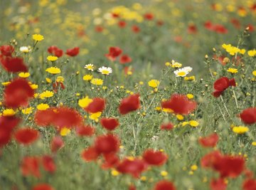 A field of blooming wild spring flowers and weeds.